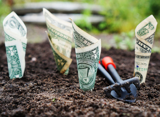 One dollar bills planted in soil to symbolize Rogers Law Group help you invest in foreclosures.